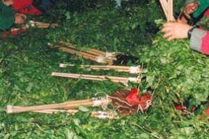 Berga plantarà vidalba per garantir-ne la collita per Patum