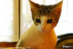 150 € per la Kitty, la gata abandonada a Berga
