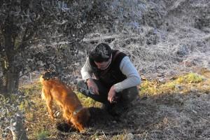 La Fira de la Tòfona del Berguedà posarà en valor el producte com a actiu econòmic i el gos tofonaire