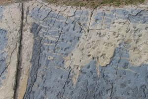 El Centre d'Interpretació del Jaciment Paleontològic de Fumanya podria estar enllestit i ja obrir portes l'any 2016