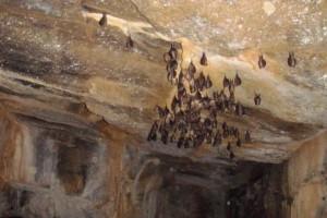 Acord entre el Club d'Esquí Berguedà i el Parc Natural Cadí Moixeró per l'accés a les coves i avencs de l'entorn protegit