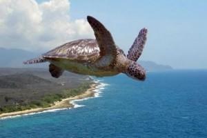 Les tortugues saben volar