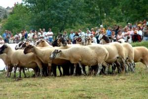 Castellar de n'Hug espera 15 pastors i més de 3.000 persones de públic al 53è Concurs Internacional de Gossos d'Atura