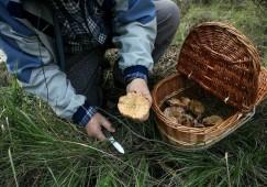 Veus a favor de fer pagar per anar a buscar bolets, si els ingressos serveixen per arreglar el bosc