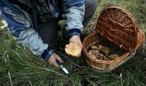 Veus a favor de fer pagar per anar a buscar bolets, si els ingressos serveixen per arreglar el bosc; max-width:100%;