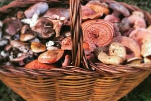 La festa dels bolets de la Pobla de Lillet aposta pel vermut i les tapes