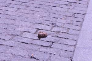 Puig-reig engega una campanya de civisme per acabar amb les deixalles i les defecacions de gossos al carrer