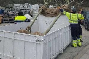 Berga replanta arbres a diverses zones