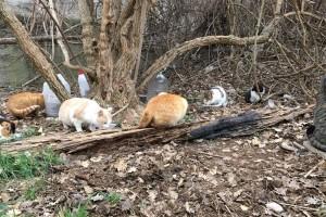 L'associació Progat Alt Berguedà controla les colònies de gats i els esterilitza