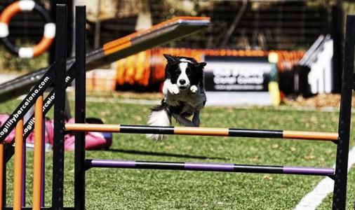 Els gossos més àgils d'Europa seran a Guardiola de Berguedà la setmana vinent; max-width:100%;