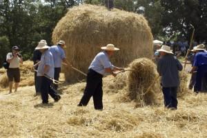 Avià reviu les feines del camp amb la festa del Segar i el Batre