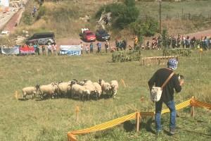 El president Carles Puigdemont assistirà al Concurs de Gossos d'Atura de Castellar de n'Hug