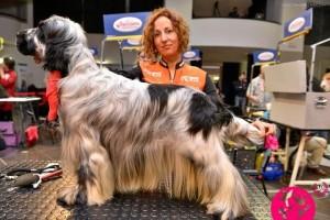 Gisela Serra, perruquera canina de Berga, medalla d'or al Master Show de Rimini, a Itàlia