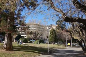 Berga plantarà més de seixanta arbres nous en els principals carrers de la ciutat