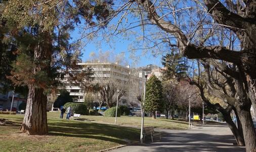 Berga plantarà més de seixanta arbres nous en els principals carrers de la ciutat; max-width:100%;