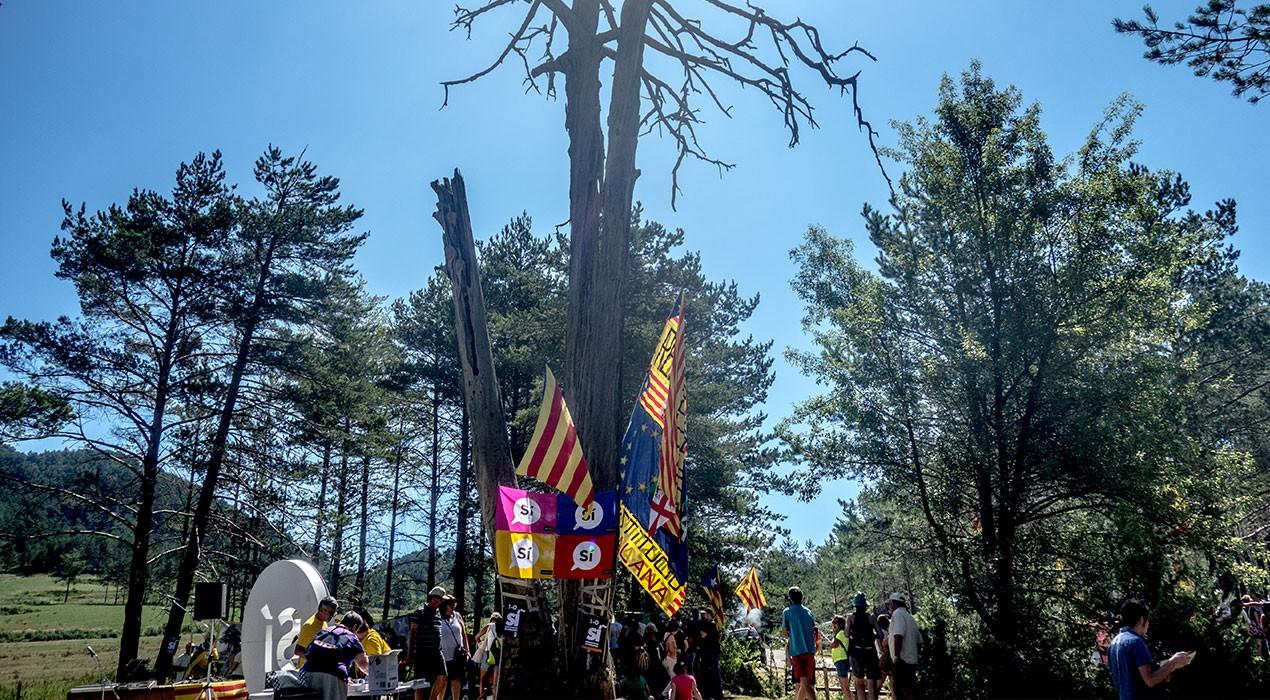Carles Puigdemont intervindrà durant l'Aplec del Pi de les Tres Branques