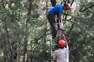 Instal·len més de 300 nius en boscos del Berguedà i el Solsonès per atraure depredadors de la processionària