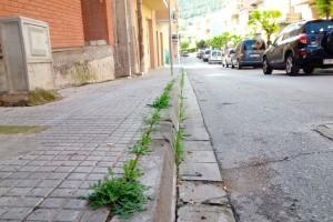 Avià canvia d'herbicida per a les voreres en saber que el que s'utilitzava fins ara pot ser cancerigen