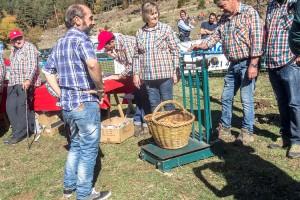 Melitó Marmi guanya el Concurs de Boletaires amb un cistell de 8,5 quilos de rovellons