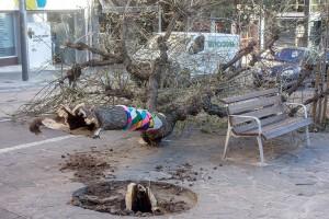 Berga, la ciutat més afectada de Catalunya per les ventades d'aquest dilluns
