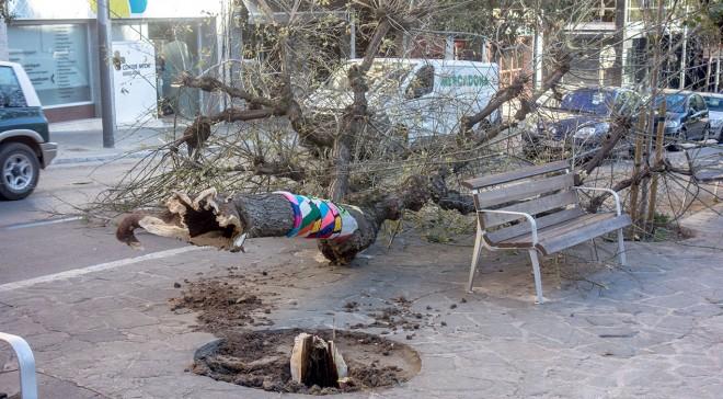 arbre-ventada-passeig-pau-berga