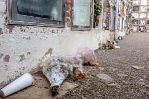 Els lladres del cementiri de Berga van robar uns 260 gerros en 3 nits: el 20, 21 i 31 de desembre