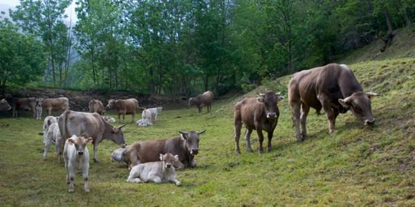 vaques-gencat