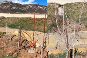La Valldan farà una marxa festiva fins l'hort dels arbres serrats, els replantarà i hi penjarà llaços grocs