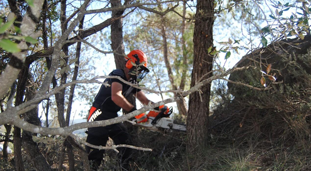 60.000 euros per facilitar la creació de cooperatives forestals al Berguedà