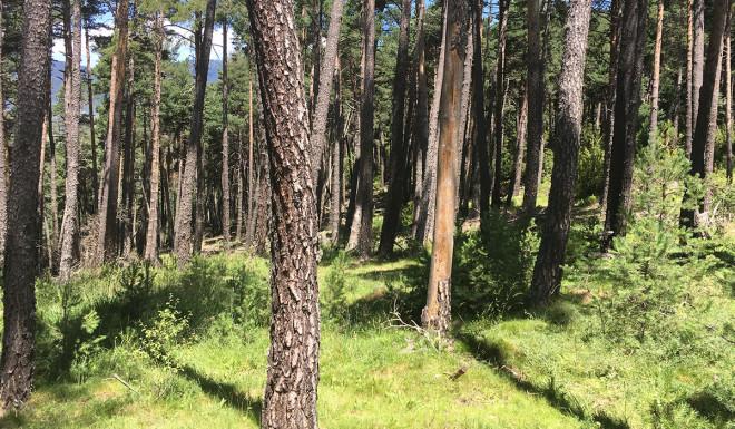 boscos-fusta