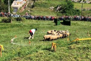 Els felanitxers Miquel Adrover i Xeco, guanyadors del 56è Concurs de Gossos d'Atura