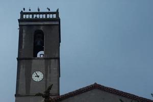 Centenars de cigonyes prenen les teulades d'Avià