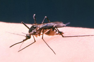 Avià fa conscienciació i prevenció sobre els mosquits