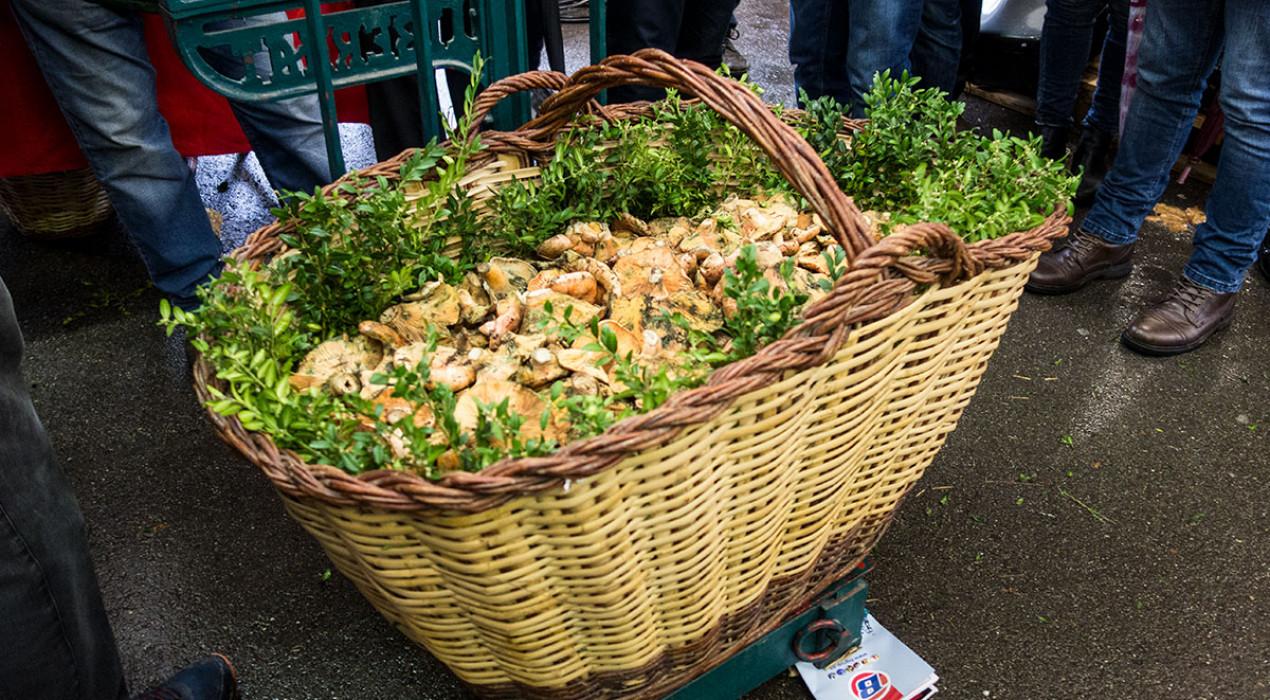 Un cistell de 43 quilos de rovellons guanya l'insòlit concurs de boletaires a la plaça Viladomat de Berga