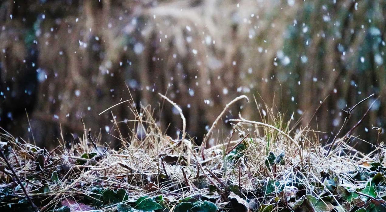 La primera nevada de l'any al Berguedà, en imatges