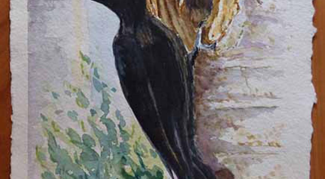 Exposició: pintures de natura