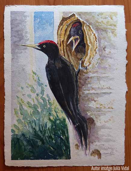 Exposició: pintures de natura @ Centre del Parc Natural del Cadí-Moixeró (BAGÀ)