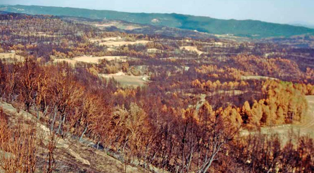 Final del cas dels incendis del 94: el Suprem dona la raó als afectats i assenyala Endesa com a responsable