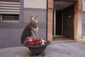 Exposició inèdita de Samuel Aranda a Avià