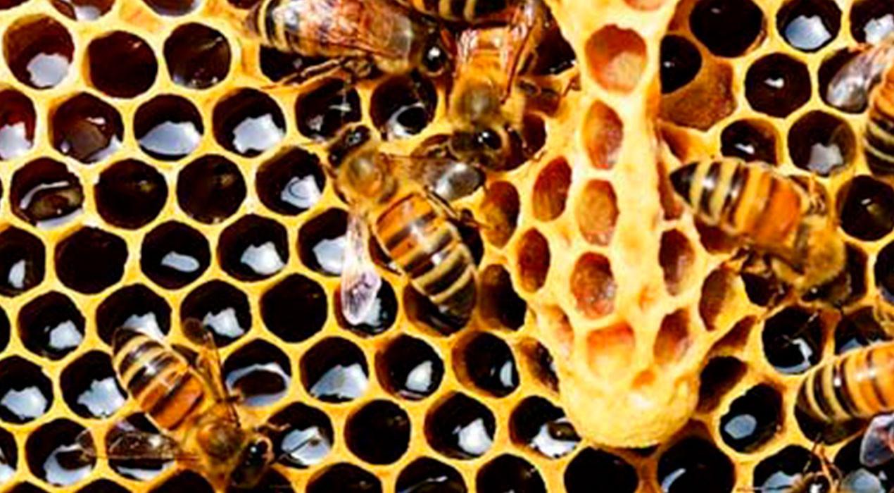 Agricultura paga 13.000 euros d'ajut a l'apicultura per a la millora a la biodiversitat al Berguedà