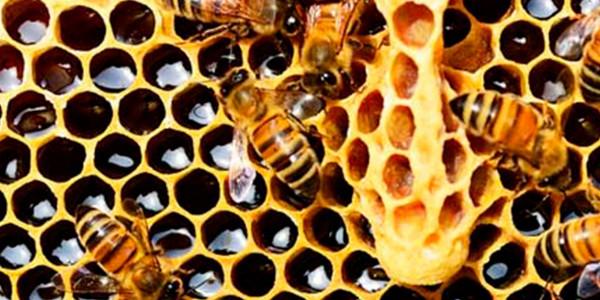 abelles-mel