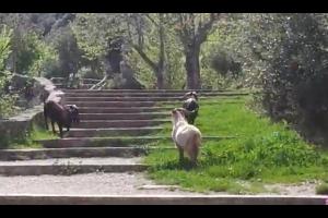 Sant Marc insòlit al santuari de Queralt: de la xocolata desfeta a les cabres salvatges