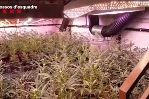 Desarticulada en punts del Berguedà una organització capaç de produir sis milions d'euros en marihuana a l'any