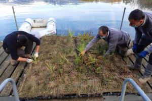 Avià torna a introduir espècies autòctones al llac de Graugés per afavorir la biodiversitat
