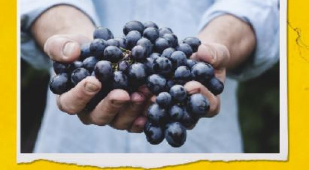 MARIDATGE de Vins ecològics i Formatges Artesans