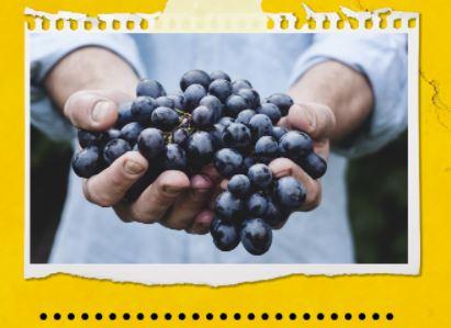 MARIDATGE de Vins ecològics i Formatges Artesans @ LOCAL SOCIAL DE GRAUGÉS