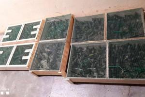 Els Agents Rurals intercepten 482 ocells protegits a una persona del berguedà que els volia vendre clandestinament